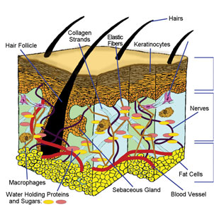 Healthy Hair Follicles